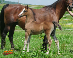 2019 Colt out of JW Possessing Beauty