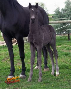 2020 Colt by King-E Otto B x That Thing You Do