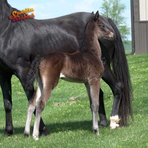 2021 Filly by King-E Otto B