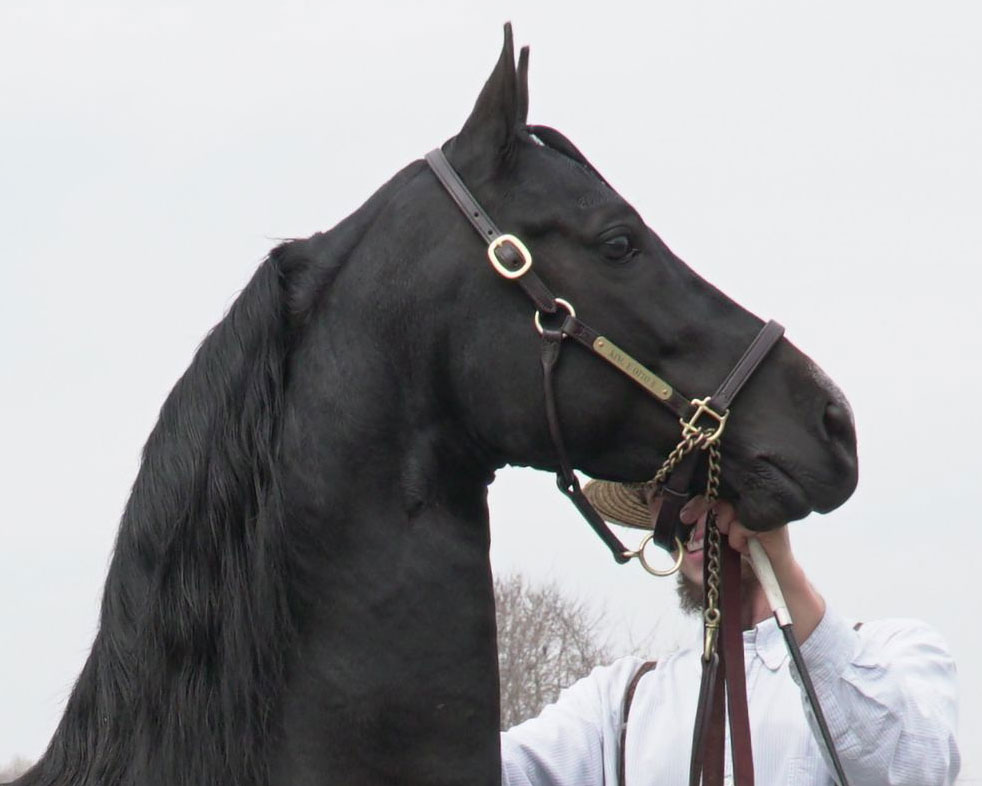 Sunrise Stallions for 2018