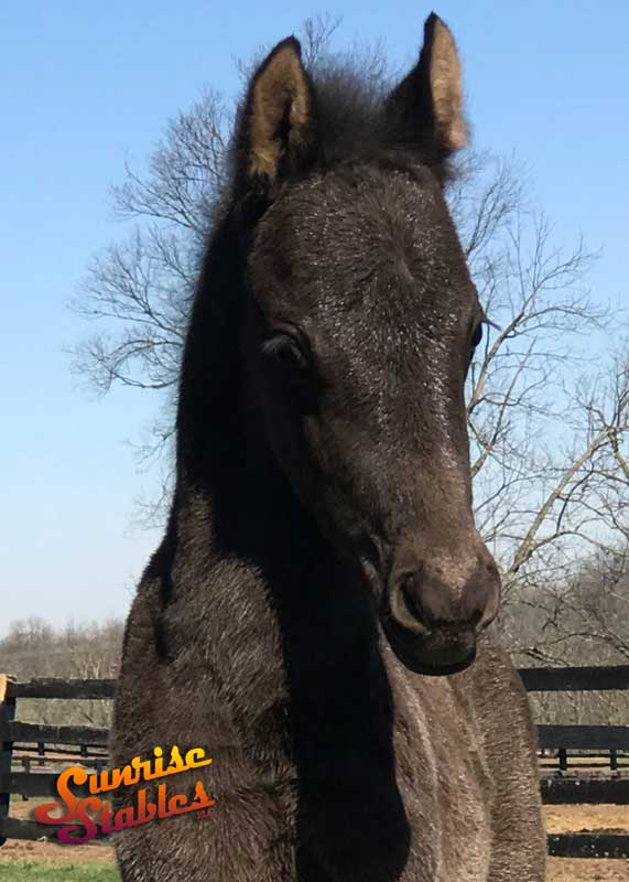2019 colt out of Newmont's Touch Of Class